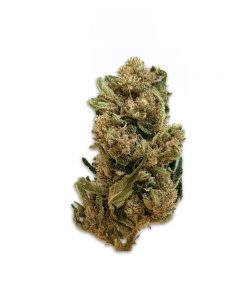 Dolomitigrow Green Pepper outdoor cannabis light 02 scaled