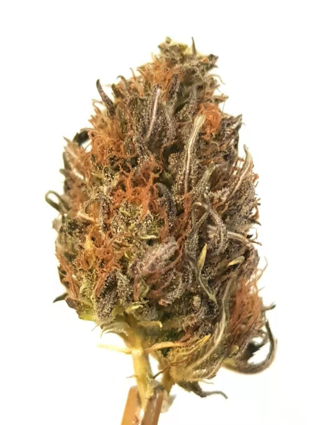 Cannabis light soul cookie outdoor