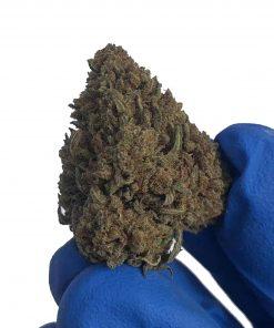 Cannabis light Oudoor Scream