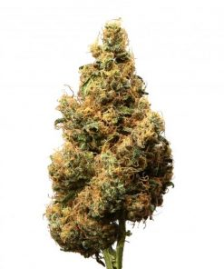 Cannabis light Dolomitigrow Outdoor Serra Soul cookie